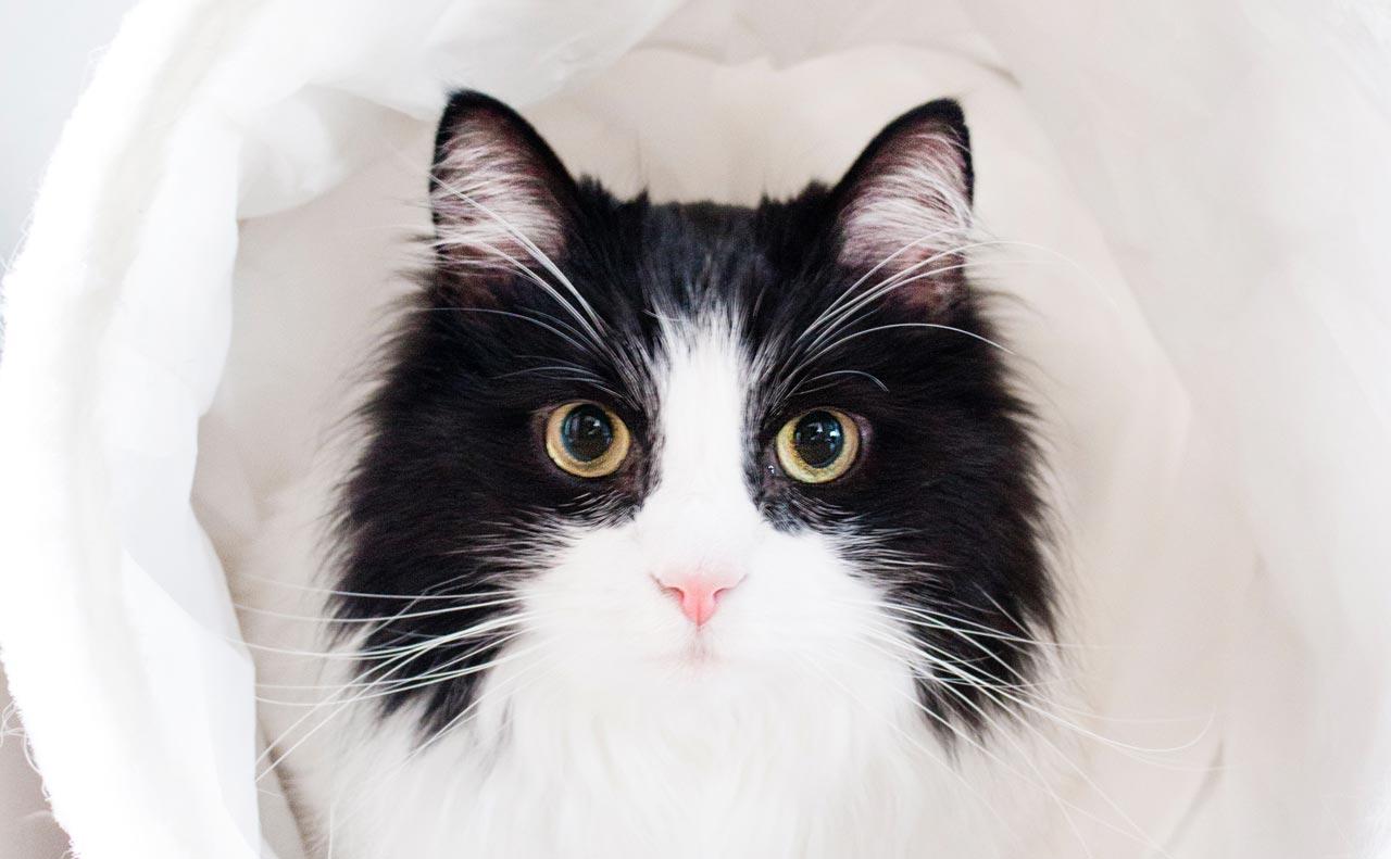 【Purrfect】SNSで海外の猫好きさんが使うこの単語に意味は?