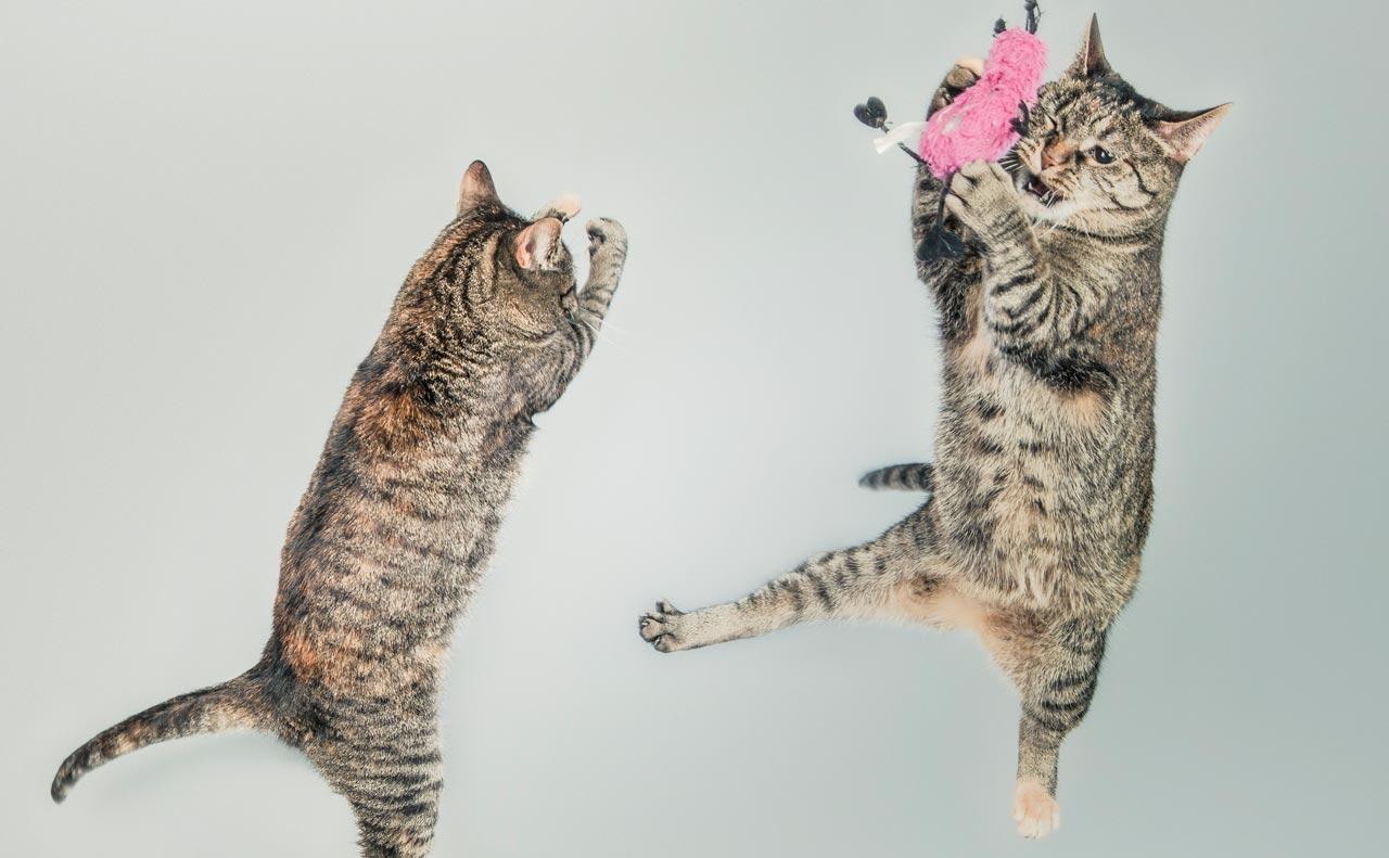 【Catastic】SNSで海外の猫好きさんが使うこの単語の意味は?