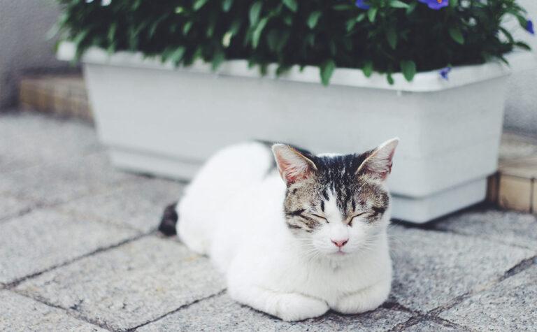 【Catloaf】は猫の香箱座りの意味として使われる「にゃん英語」