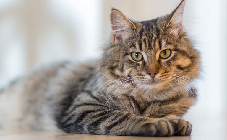 【Pawsome】はSNSで海外の猫好きさんがよく使う「にゃん英語」