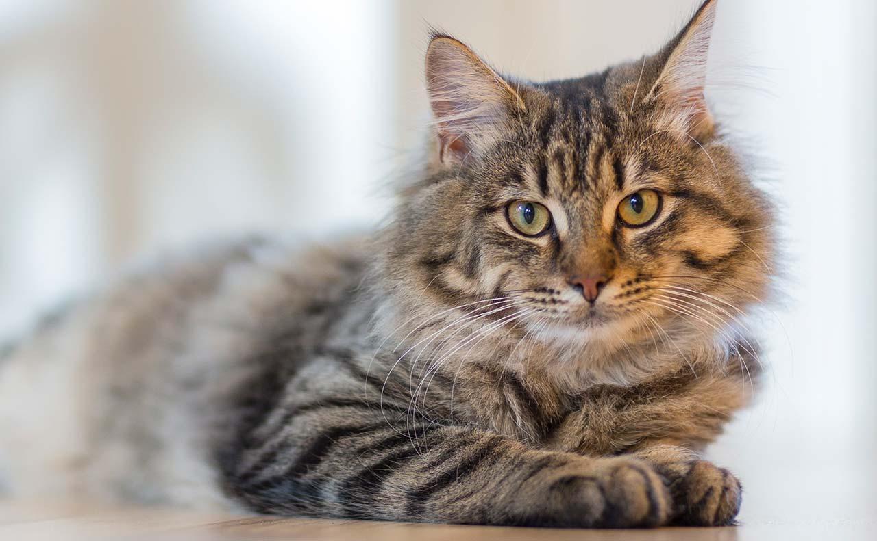 CATS 【Pawsome】SNSで海外の猫好きさんが使うこの単語の意味は?