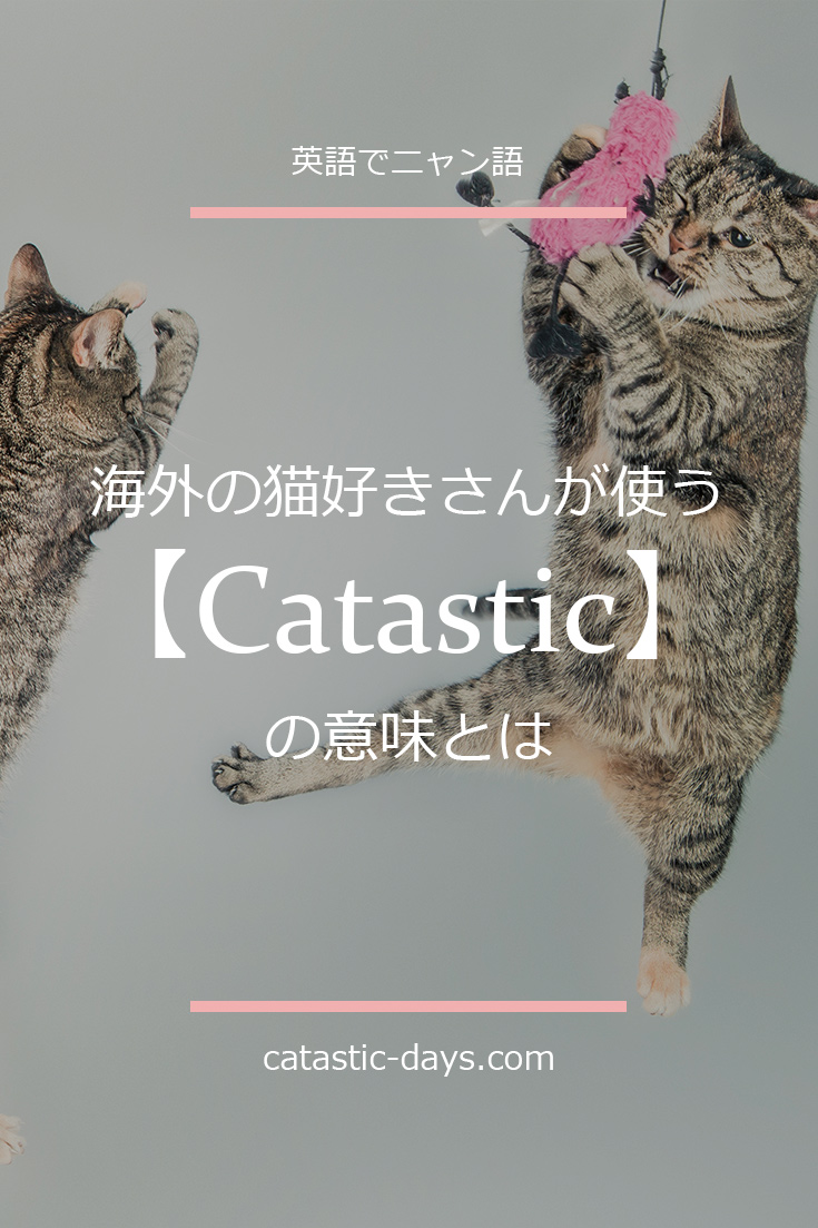 CATS 【Catastic】はFantasticの意味として使われる「にゃん英語」