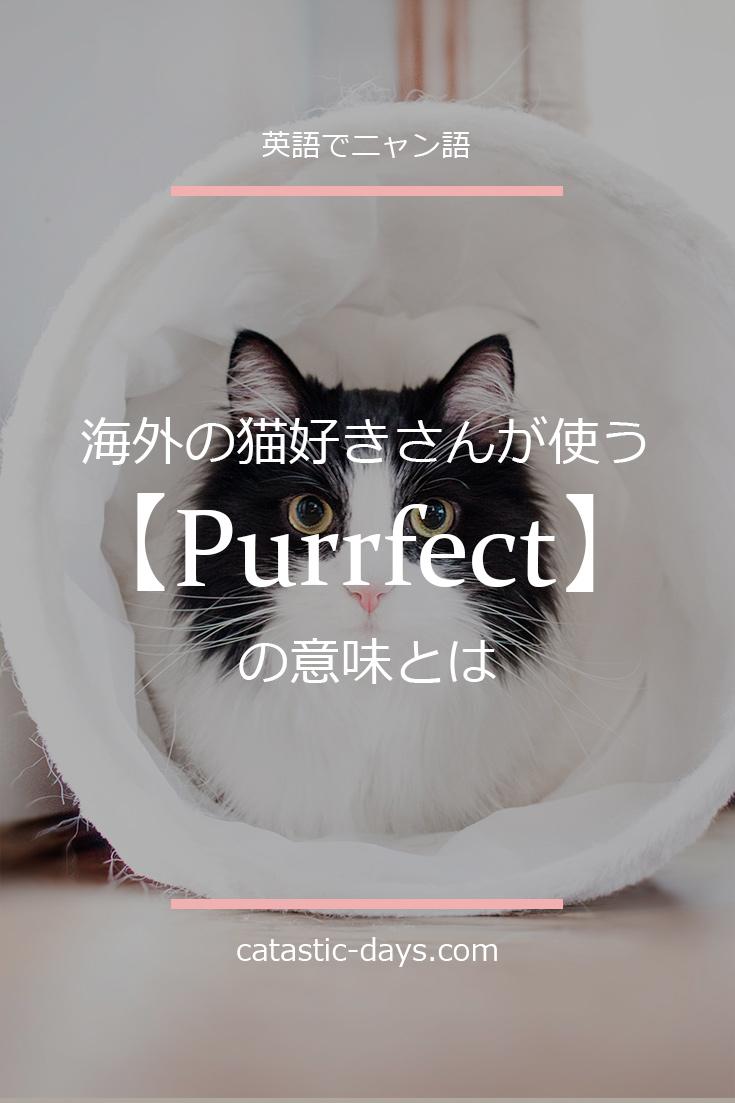 【Purrfect】海外の猫好きさんが使うPurrfectの意味とは?