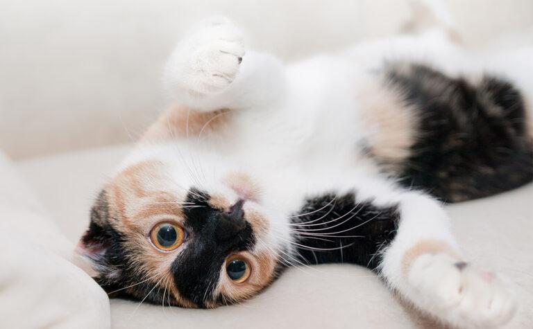 海外の猫好きさんが使う【Everypawdy】の意味とは?