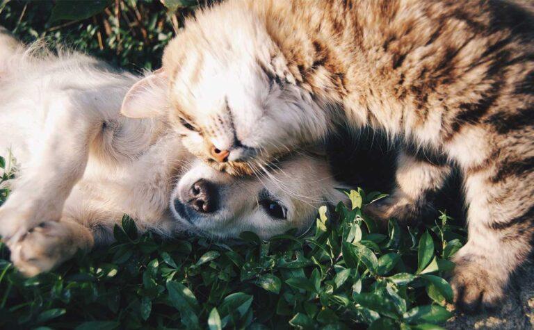 【Furriend】海外の猫好きさんが使うFurriendの意味とは?