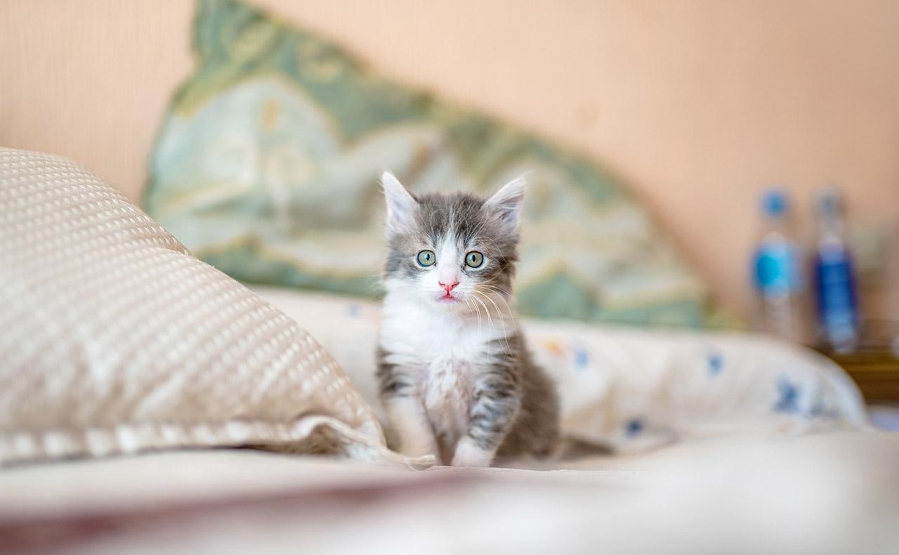 世界の猫やペットの記念日一覧