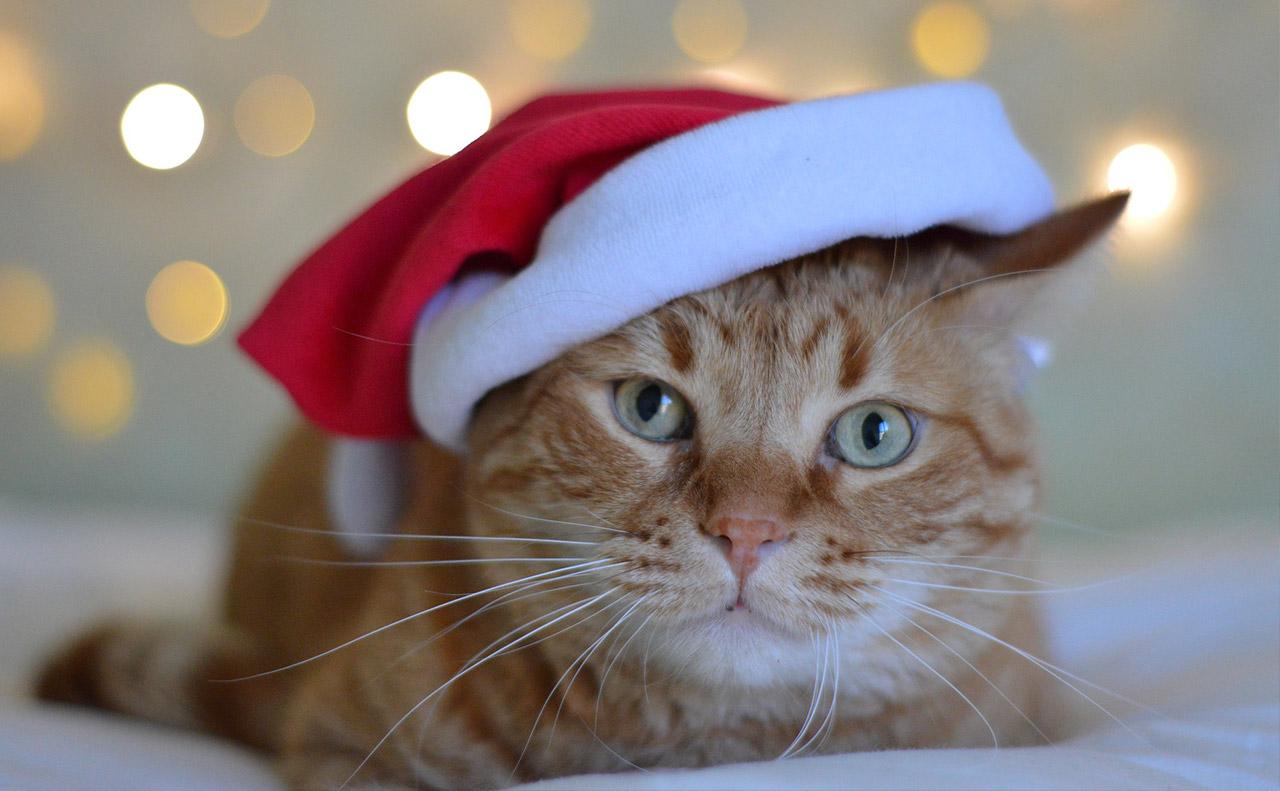 猫好きさんのためのクリスマスにゃん英語フレーズ